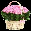 """Фото товара 101 роза """"Аква"""" в корзине в Мариуполе"""