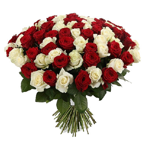 Фото товара 101 красно-белая роза в Мариуполе