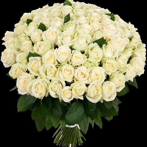 Фото товара 101 белая роза в Мариуполе