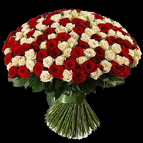 Фото товара 201 красно-кремовая роза в Мариуполе