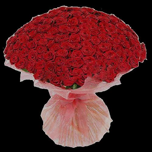 Фото товара 201 красная роза в Мариуполе