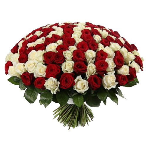 Фото товара 201 красно-белая роза в Мариуполе