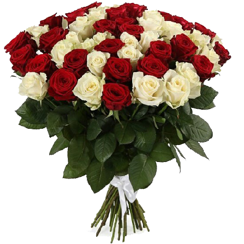 Фото товара 51 красно-белая роза в Мариуполе